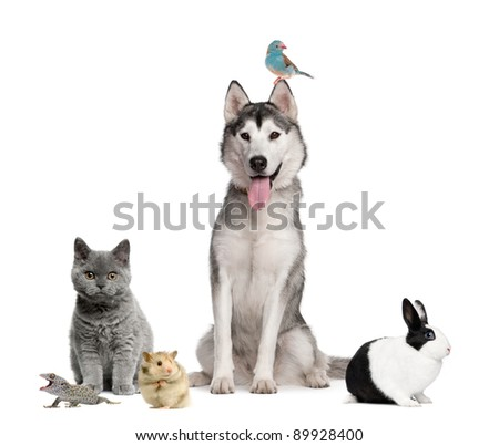 Group of pets in front of white background - stock photo