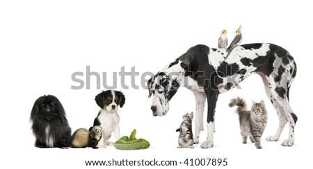 Group of pets in front of white background, studio shot - stock photo