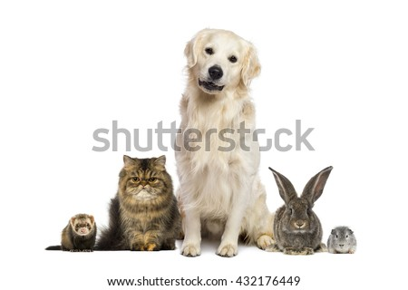 Group of pets isolated on white - stock photo