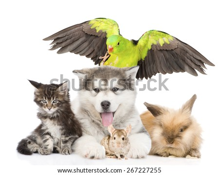 group of pets lying in front. Isolated on white background - stock photo