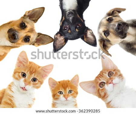 Group of pets peeking