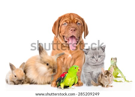 Group of pets together in front view. isolated on white background - stock photo
