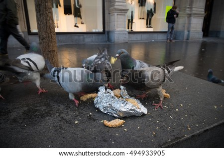group of pigeons eating some waste bread in the antwerp shopping district