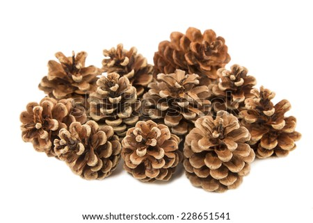Group of pine cones isolated - stock photo