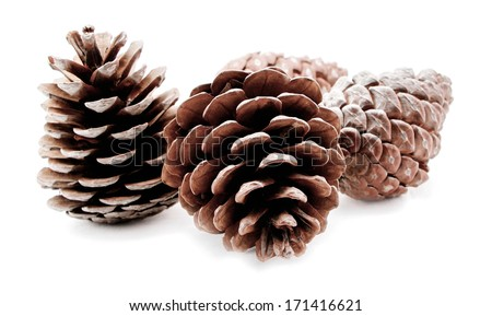 Group of pine cones isolated on white background - stock photo