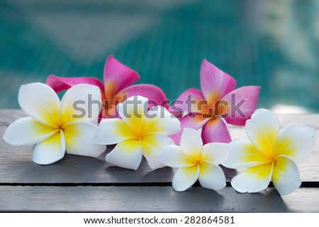 Group of Plumeria Flowers at Edge of Pool - stock photo