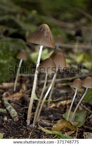 Group of poisonous mushrooms in the forest - stock photo