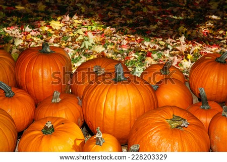 Group of pumpkins against colorful fall leaves,