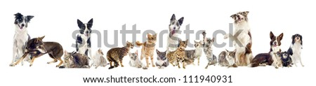 group of purebred cats  and dogs on a white background - stock photo