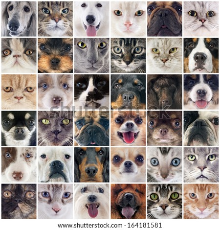 group of purebred dogs and cats on a photography montage - stock photo