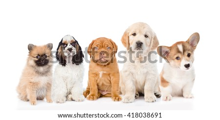 group of purebred puppies. isolated on white background