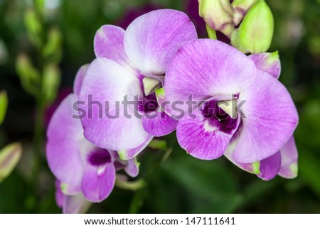 Group of purple white orchid flowers in bunch with green leaves in background