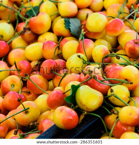Group of Rainier cherries at Puyallup Farmer Market, Puyallup, Washington, USA. A close up full frame of Rainier cherries.