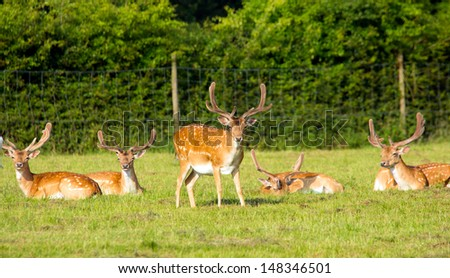 Group of red deer in the New Forest Hampshire England - stock photo