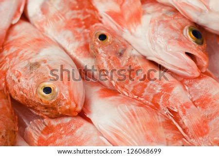 Group of redfish displayed in a fish market in italy - stock photo