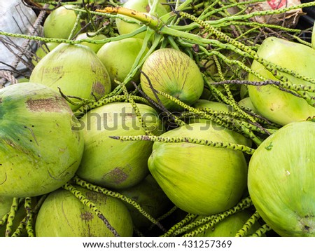 group of ripe coconut, coconut for sweet drink, coconut juice fresh health - stock photo