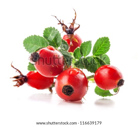 Group of rose hips isolated on a white background. - stock photo