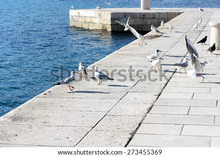 Group of seagulls and pigeons hanging out near the sea. In Split, Croatia. Natural light, selective focus.  - stock photo