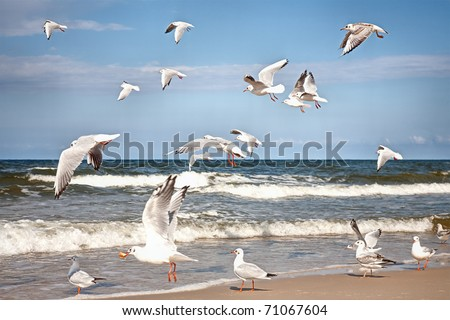Group of seagulls ower sea - stock photo