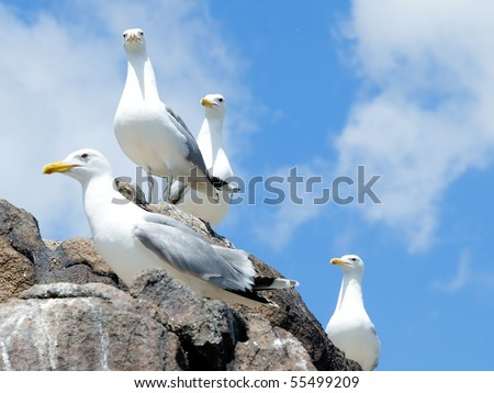 Group of seagulls, sitting on the rock - stock photo