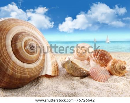 Group of seashells on the beach - stock photo