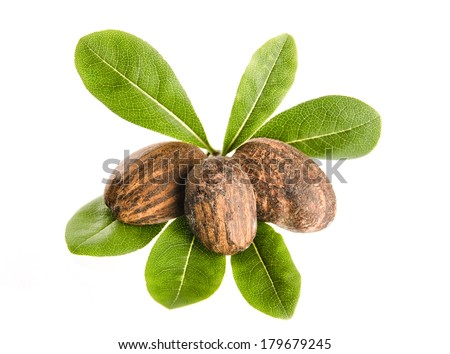 group of shea nuts with leaves on white background - stock photo