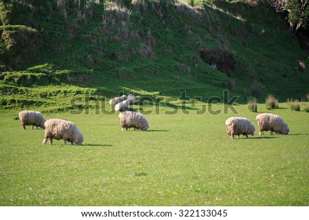 group of sheep in valley