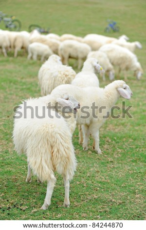 Group of sheep on grass - stock photo