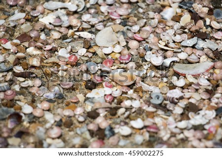 group of shell on sea beach