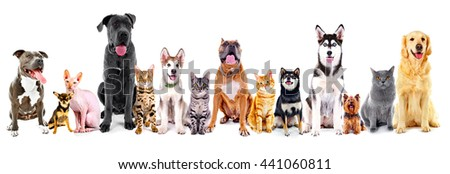 Group of sitting cats and dogs, isolated on white - stock photo