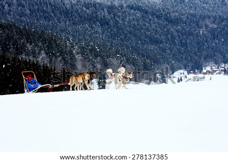 Group of sled dogs running through lonely winter landscape - stock photo