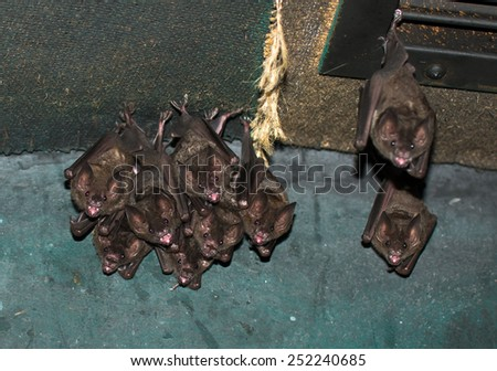 Group Of Small Bats - stock photo