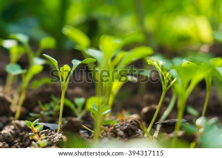 Group of small plant on a pile with soil on green bokeh background. - stock photo
