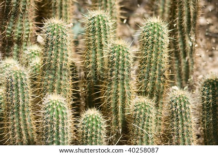 Group of small thorny cactus - stock photo