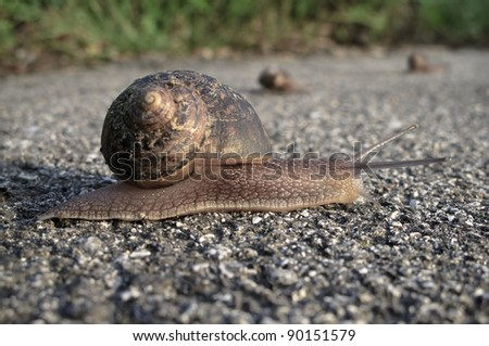 Group of snails crossing the street