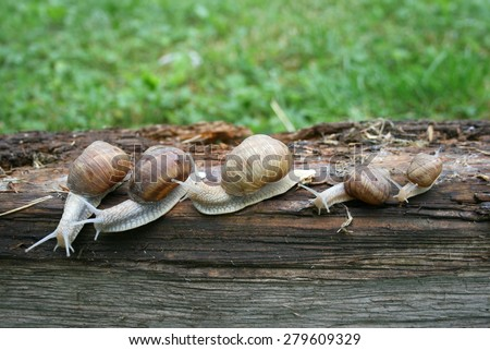 Group of snails, wooden surface