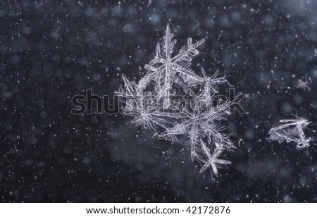 Group of snow flakes on abstract background - stock photo