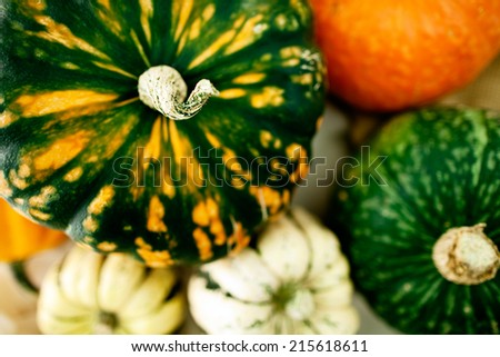 Group of squash and pumpkins for fall and Thanksgiving themes.  - stock photo
