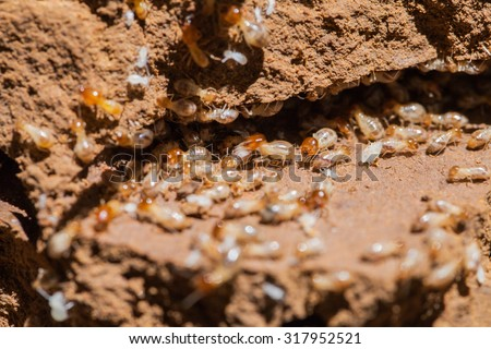 group of termites entering into soil - stock photo