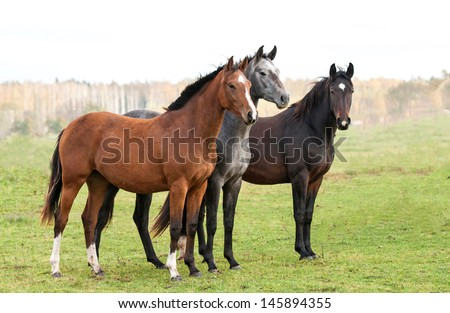 Group of three horses on pasture in autumn - stock photo