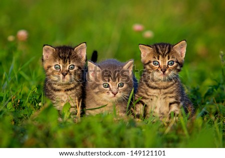 Group of three little kittens on the grass