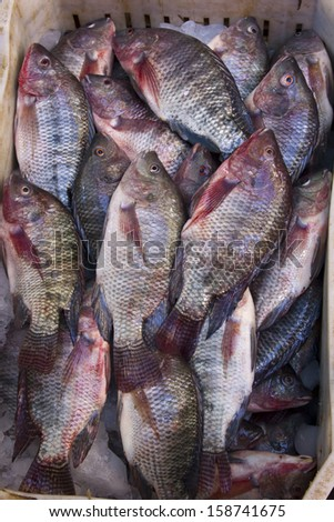 Group of tilapia fish  - stock photo