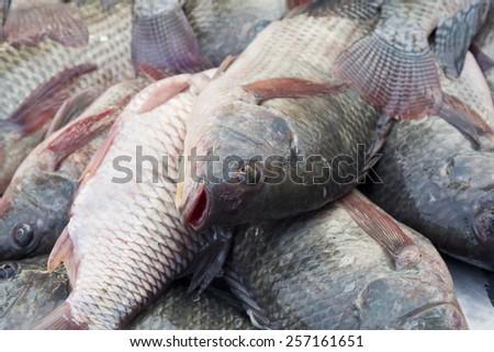 Group of tilapia fish ,fish market - stock photo