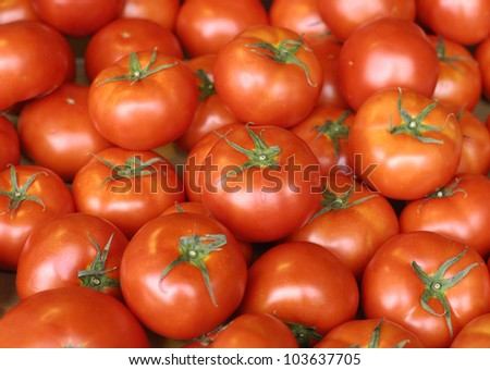 group of tomatoes background