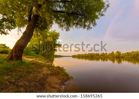 Group of trees  - stock photo