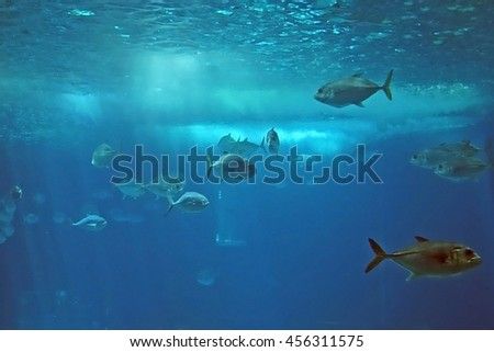 Group of tropical fishes in the Lisbon Oceanarium. Main tank of the Lisbon Oceanarium, Portugal. - stock photo