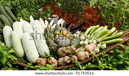 Group of tropical vegetables