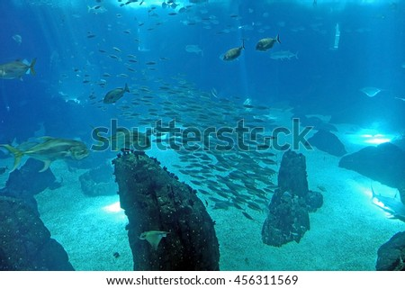 Group of various species of big fishes in the Lisbon Oceanarium. A shoal of tropical fishes in the middle of the photograph. Main tank of the Lisbon Oceanarium, Portugal. - stock photo