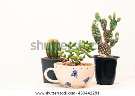 Group of various type cactus and succulent Euphorbia put together in house garden - stock photo