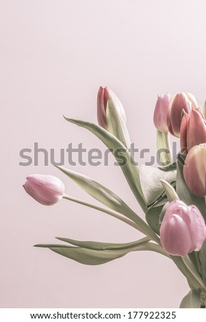Group of vintage tulips in soft pink color. Vertical image with copy space. - stock photo